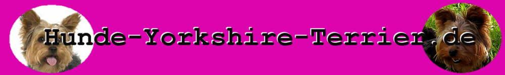 Yorkshire Terrier Hunde Informationen Rassebeschreibung Aussehen Charakter
